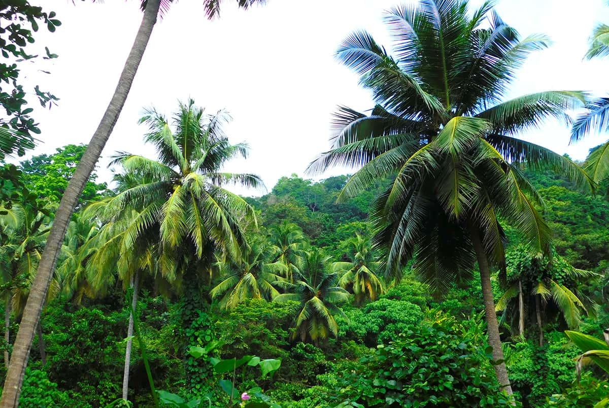 пхукет самостоятельное путешествие по острову