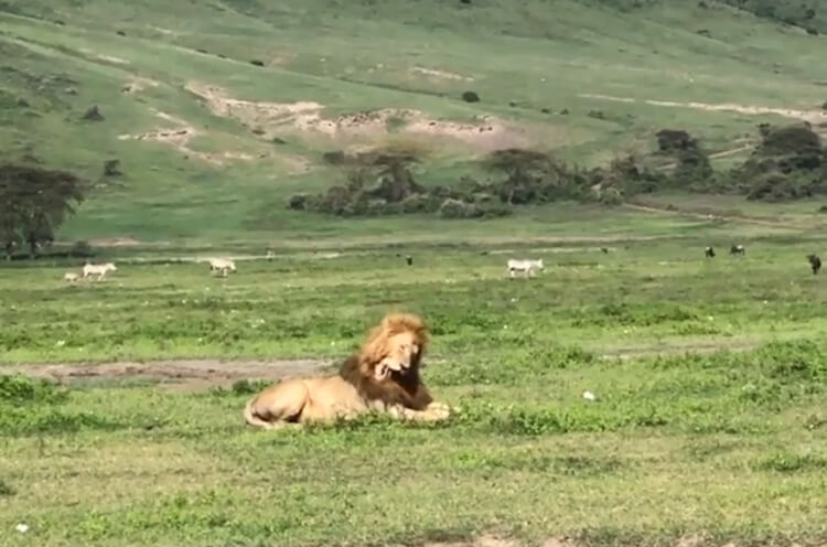 сафари на Занзибаре